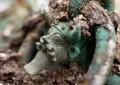 Découverte de la tombe d'un prince celte en Champagne