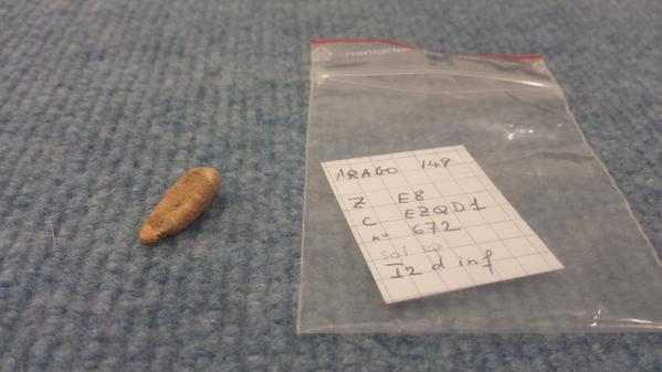 dent-tautavel-560000-ans--