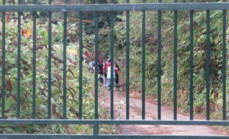 250 Rroms squattent illégalement l'île des Impressionnistes à Chatou