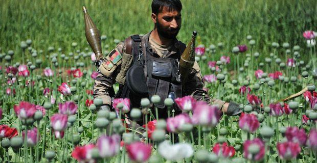 Afghanistan : la culture du pavot repart à la hausse
